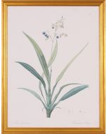 Dianella Botanical Lithograph Wall Art in Gold Wood Frame