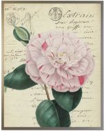 Mountain Laurel Botanical Wall Art With Size and Framing Options