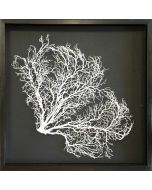 Painted Exotic Sea Fan Coastal Beach Wall Art on Charcoal Gray Mat with Aged Black Frame - 25 x 25 - Available in 18 Colors