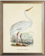 Siberian Crane Framed Wall Art with Size and Framing Options