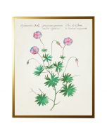Vintage Bookplate with Flowers Wall Art with Size and Frame Options