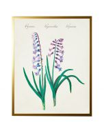 Vintage Bookplate with Hyacinth Wall Art with Size and Frame Options