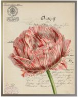 Vintage Orange Tulip Wall Art With Size and Frame Options