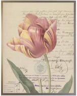 Vintage Yellow and Pink Tulip Wall Art With Size and Framing Options