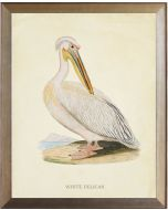 White Pelican Framed Wall Art With Size and Framing Options
