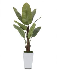 Banana Tree with Natural Moss in a White Glazed Pottery Pot - LOW STOCK