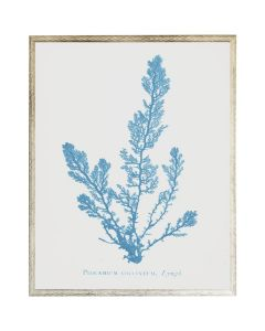 Blue Coral Wall Art 3 with Size and Frame Options