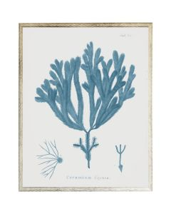 Blue Coral Wall Art 4 with Size and Frame Options