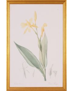 Yellow Canna Botanical Lithograph Wall Art in Gold Wood Frame