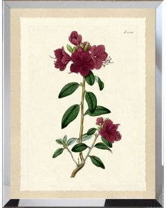 Deep Red Botanical Flower I Framed Wall Art - Available in Variety of Sizes