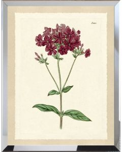 Deep Red Botanical Flower II Framed Wall Art - Available in Variety of Sizes