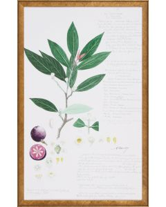 Leaves & Fruit Descubes Fruit II Botanical Lithograph Wall Art in Gold Frame