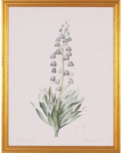 Lavender Fritillaria Botanical Lithograph Wall Art in Gold Wood Frame