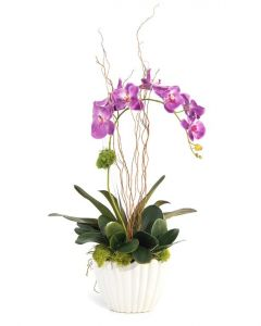 Raspberry Orchid in a White Ceramic Vase