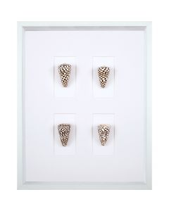 Marble Cone Shell Art
