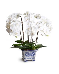Phalaenopsis Orchid in White and Blue Square Ceramic Vase