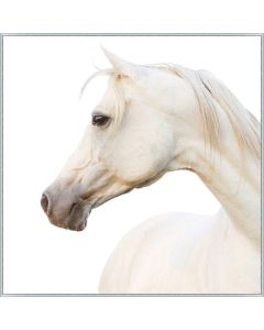 Portrait of a Pearl Horse on Canvas Framed Wall Art