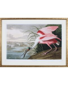 Audobon Illustration of a Roseate Spoonbill Wall Art in Golden Brown Frame