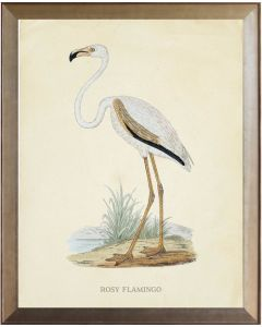 Rosy Flamingo Framed Wall Art With Size and Framing Options