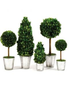 Set of 5 Boxwood Topiaries in Glass