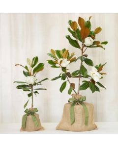 Southern Magnolia Memorial Gift Tree With Optional Engravable Gift Tag