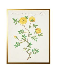 Vintage Bookplate with Yellow Flowers Wall Art with Size and Frame Options