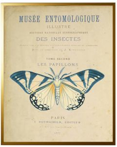 Vintage Butterfly Framed Wall Art With Size and Framing Options