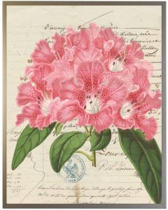 Vintage Pink Flower Wall Art With Size and Framing Options
