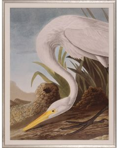 White Heron at Water's Edge Giclee Wall Art in Silver Frame