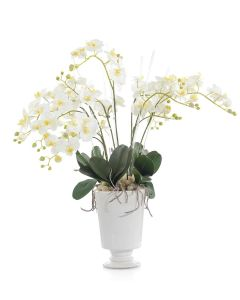 White Orchids and Foliage in a White Pedestal Vase