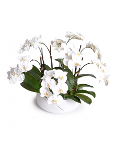 White Phalaenopsis Orchid Centerpiece in White Ceramic Bowl