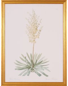 Yuca Flower and Plant Botanical Wall Art in Gold Wood Frame
