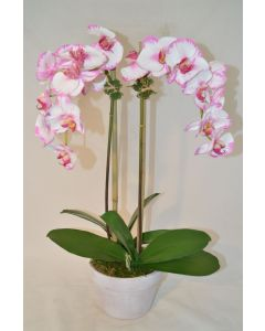 Faux White and Pink Orchid Plant in White Pot