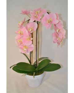 Light Pink Orchid Plant in White Pot