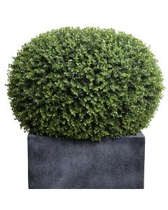 34 Inch Tall Faux Pumpkin-Shaped Boxwood Shrub in Grey Cube Fiberglass
