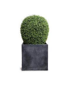 48 Inch Height Faux Lantern-Shaped Boxwood Shrub in Fiberglass Cube Pot