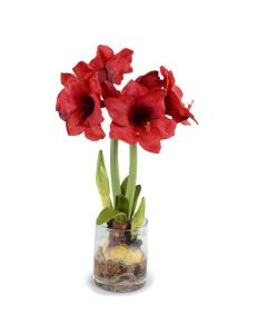 Amaryllis Plant Arrangement with Red Flowers