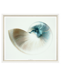 Aqua Nautilus Shell Framed Wall Art