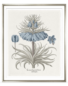 Basilius Besler I Blue and Grey Framed Wall Art