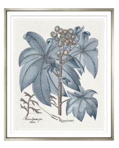Basilius Besler II Blue and Grey Framed Wall Art