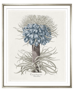 Basilius Besler III Blue and Grey Framed Wall Art