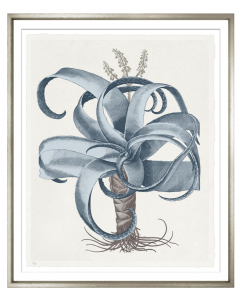 Basilius Besler VI Blue and Grey Framed Wall Art