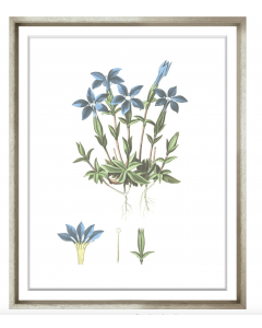 Bessa Blue Flower Framed Wall Art I