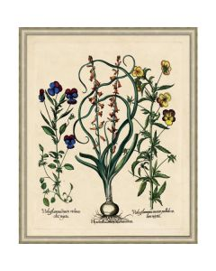 Besslers Hyacinths Framed Giclee Framed Wall Art