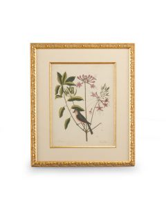 Catesby Bird & Botanical I Giclee Print Framed Wall Art