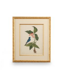 Catesby Blue Bird and Botanical Framed Wall Art