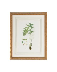 Citrus Ferns I Gold Framed Wall Art - ON BACKORDER UNTIL JULY 2020