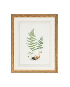 Citrus Ferns II Gold Framed Wall Art - ON BACKORDER UNTIL JULY 2020