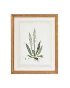Citrus Ferns III Gold Framed Wall Art - ON BACKORDER UNTIL JULY 2020