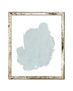 Classic Sea Fan Suspended between Glass Framed Art - 15 x 18 - Available in 18 Sea Fan Colors